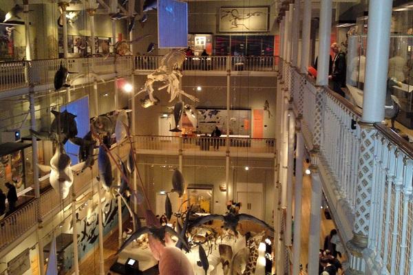 National Museum Scotland, Edinburgh Credit John & Zana Williams Flickr