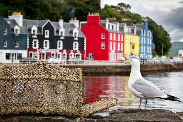The iconic multicoloured houses of Tobermory Harbour on the Isle of Mull, Scotland