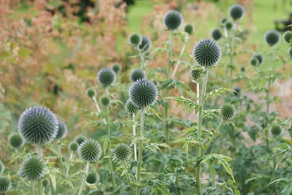 Floral bokeh in Priorwood Garden, Melrose [credit Cole Henley on Flickr]